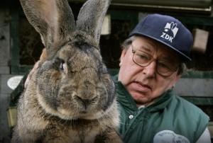 Огромный кролик