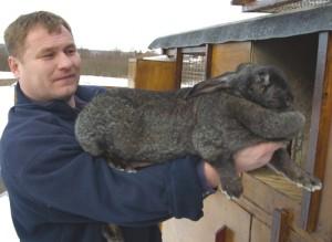Кролик возле клетки