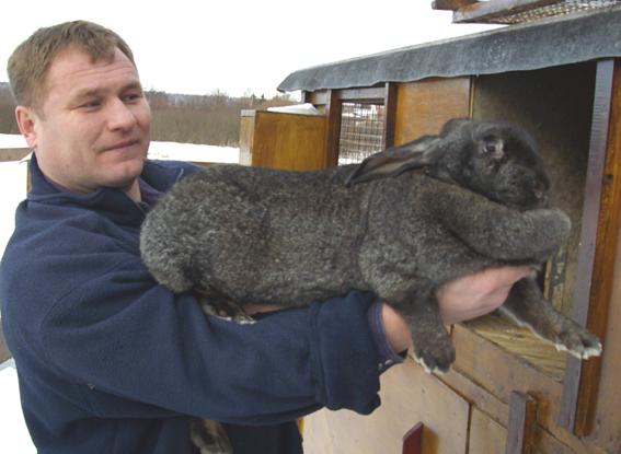 содержания кроликов чаще
