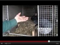 Клетки для кроликов видео