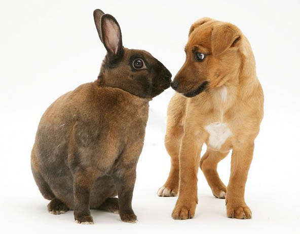 фото кроликов всех пород
