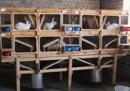 Простая клетка бункерная для кроликов фото
