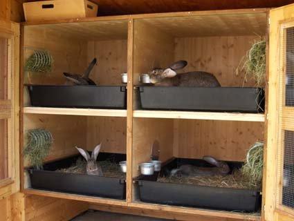 Простая клетка для кроликов