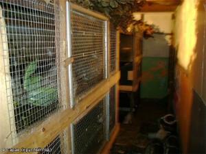Простая бункерная клетка для кроликов фото.