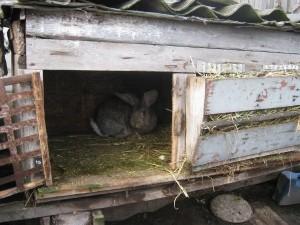 Клетка для кроликов фото