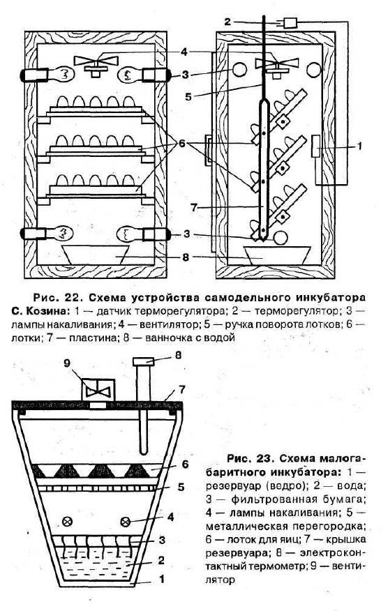 Описание и правила выращивания всеми любимой груши Дюшес