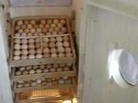 Инкубатор своими руками из холодильника фото