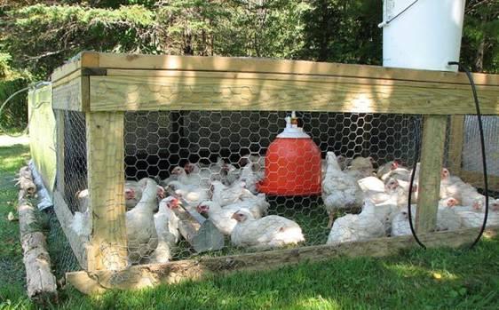Клетки для цыплят бройлеров своими руками