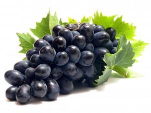 Кодрянка - лучший сорт винограда