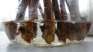 Укоренение черенков винограда фото