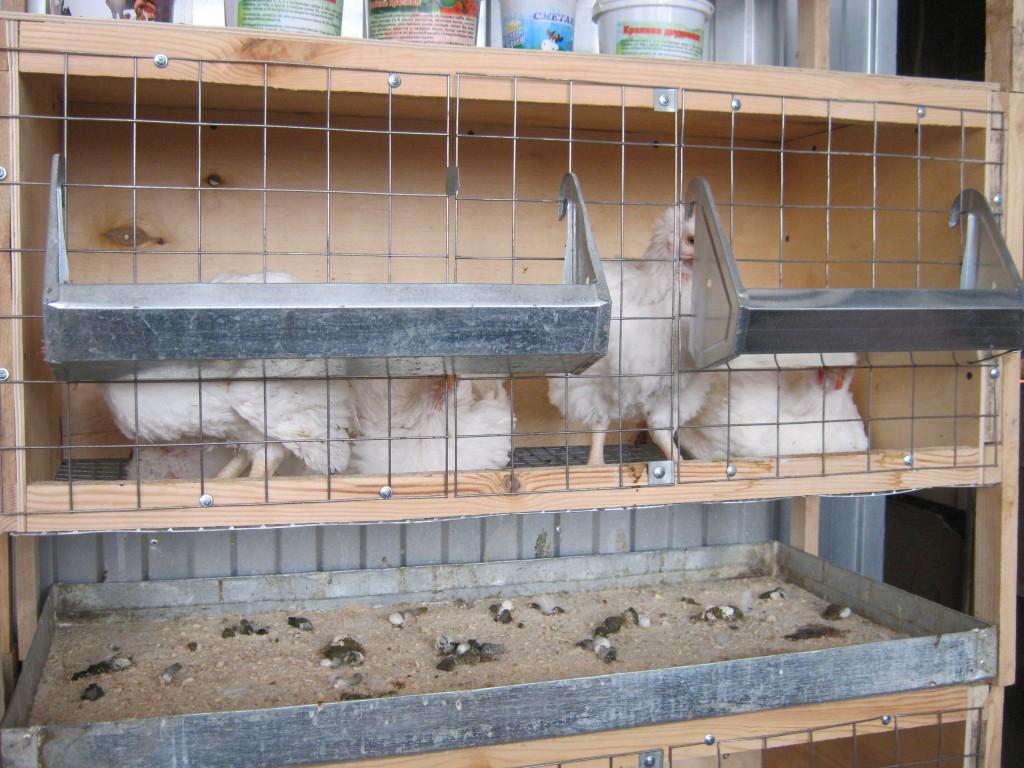 как правильно построить цыплятник своими руками
